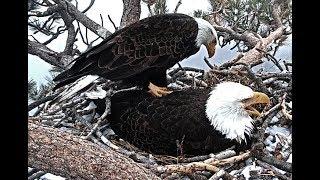 3-21-19 Big Bear Eagles~  Not On My Back!