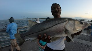 Constant ACTION‼️ Sebastian Inlet Snook Fishing
