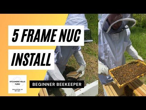 , title : 'Beginner Beekeeper Installs His First 5 Frame Nuc