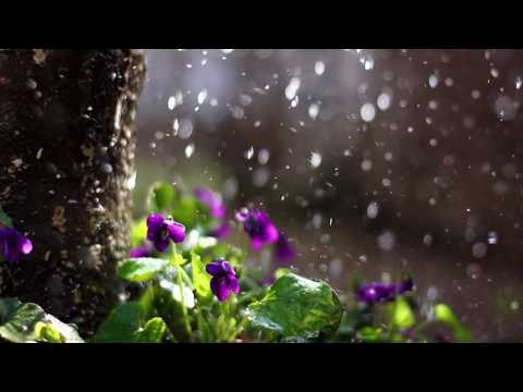 Calling the Rain | Soothing music inspired by nature