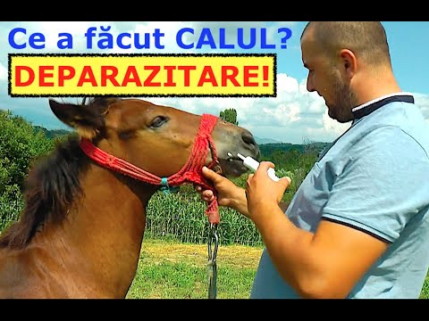 Tratamentul papilomului intern