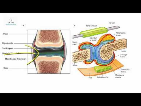 Sinovita a chirurgiei genunchiului istoric medical