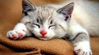10 Hours of CAT PURRING SOUND | 3D High-Fidelity Sound | Soothing Sound | Sleep Meditation | Yoga