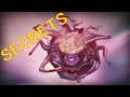 Dungeons and Dragons Lore Beholder Secrets