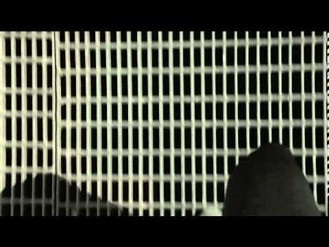 XOCHIHUA - EL JACAL (VIDEO OFICIAL)