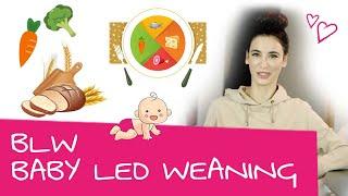 BLW: Alles Was Du über Baby Led Weaning Wissen Musst | Wann Starten? Unterschied Zu Beikost Mit Brei
