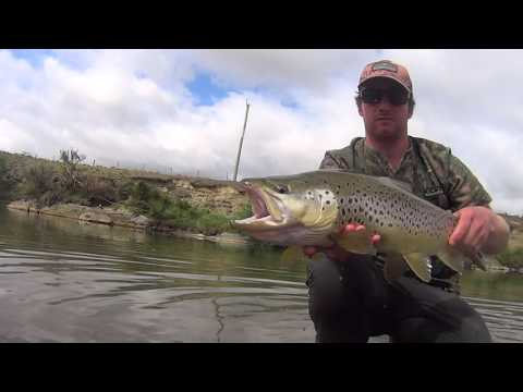Fly Fishing Brown Trout NZ