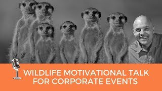 """Meerkat Motivation for the Marketplace"" - Estienne de Beer - Motivational Speakers in South Africa"