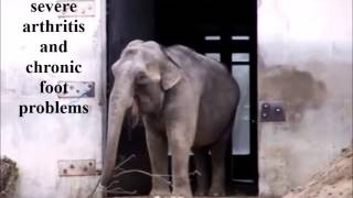 Retire Ruth from Buttonwood Park Zoo to The Elephant Sanctuary