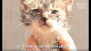Kitten's Only Wish Is To See His Mom While Trapped Inside A Wall | Kritter Klub