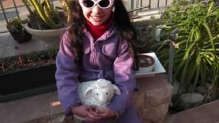 Leen Bdeer - نانسي عجرم - كتكوتة - لين بدير