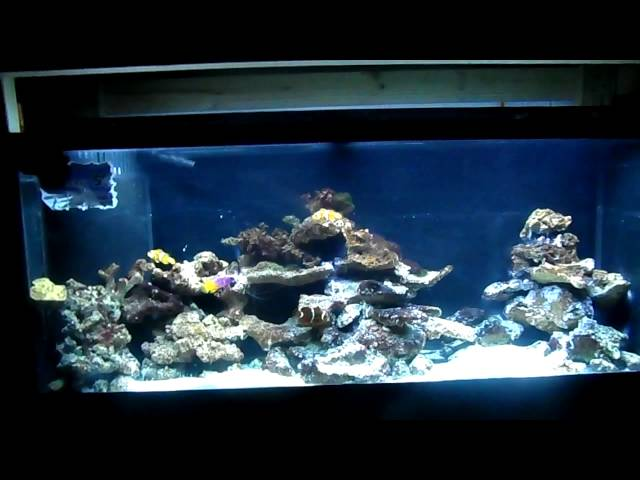 How To: Start and Cycle an Aquarium Saltwater Reef Tank Correctly and Freshwater
