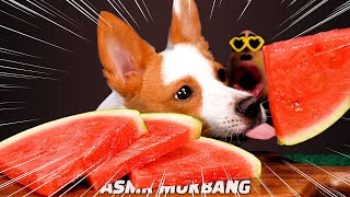 PUPPY DOG Cool watermelon🍉MUKBANG EATING SOUND ASMR 강아지 시원한 수박 먹방 semangka แตงโม スイカ dưa hấu арбуз