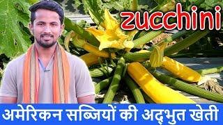 Exotic Vegetables Farming in India | Amazing Zucchini / Squash Farming Technique in Hindi