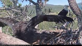 Big Bear Eagles * SIMBA CHASES SHADOW OFF NEST!! * Lessons are Paying off Mom & Dad! * 7/10/19
