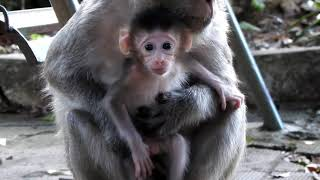 Omg! Look The Way To Rescue Pity Monkey at KPC How The Man Rescue Pity Monkey?
