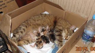 Бездомная кошка попросилась  в квартиру, чтобы родить