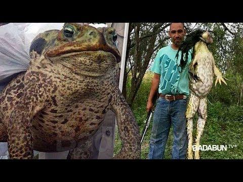 Il layered le cause vestenti per pescare e cacciare