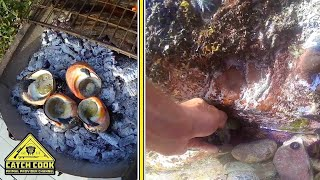 Foraging for Alikreukel, Delicious Shellfish Recipe [CATCH COOK] Struisbaai, Western Cape