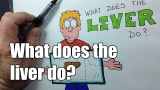 What does the liver do? v2