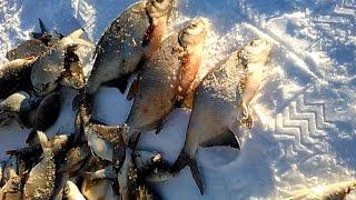 Медуза ловля на зимней рыбалке
