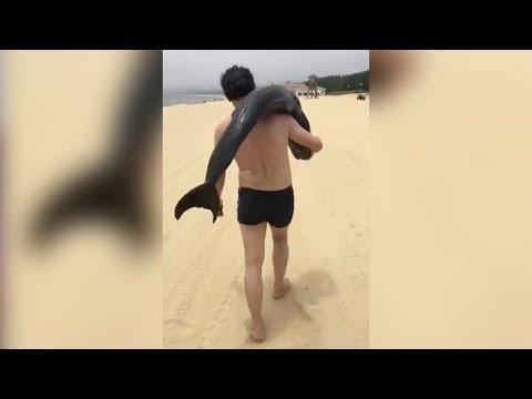 Delphin auf der Schulter