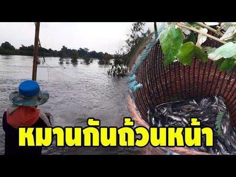 น้ำลด ปลาผุด EP2; พามาดูชาวบ้านเจี่ย ยกยอ ยกสะดุ้ง หาปลา หลังน้ำลด จะได้หรือไม่ มาดูกันเลย!!