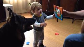 German Shepherd protects baby from the evil finger puppet.