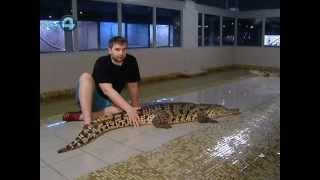 Крокодиловая ферма в Екатеринбурге