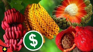 6 SECRETS of FRUITS AND VEGETABLES