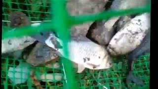 Сетка своими руками для ловли рыбы