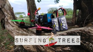 Surfing | Tree | Fpvfreestyle