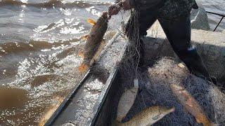 Ловля кеты на резинку в амуре