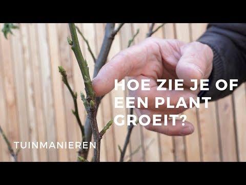 Hoe zie je of een plant of struik groeit?