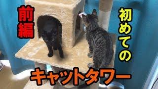 【ドタバタ子猫劇場】キャットタワーが届いた!(前編)