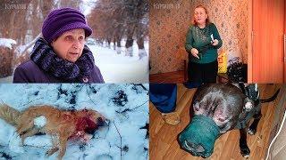 В Курчатове на прогулке питбультерьер загрыз собаку