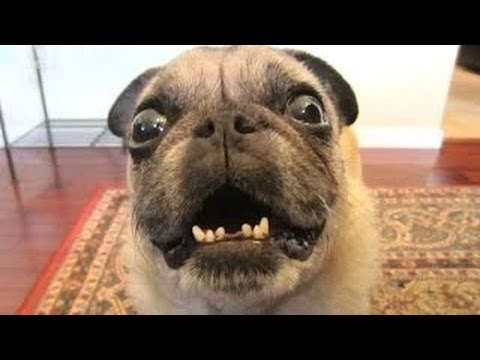 Funny Dogs Compilation – Funny videos 2014