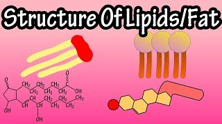 Lipids - Structure Of Lipids - Structure Of Fats - Triglycerides, Phospholipids, Prostaglandins