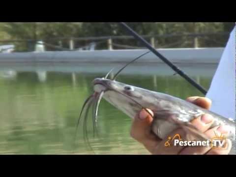 Pesca a pesci gatto e storioni - Evento Pescanet