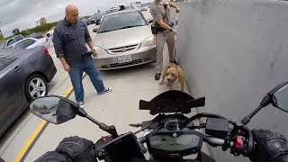 Who let the dogs out? Featuring Officer Rob! Episode 3
