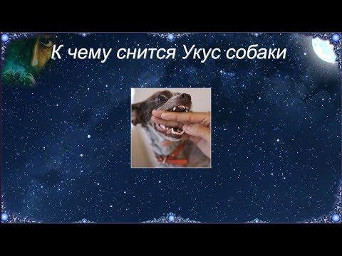 К чему снится Укус собаки (Сонник)