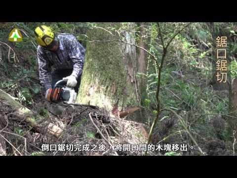 臺灣人工林收穫作業實務示範影片(3/8) —伐木流程