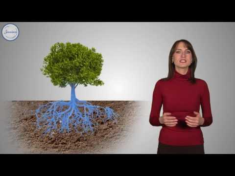 Передвижение воды по растению