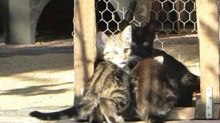 Katze Mimi - Mimi's Kinder haben den Tod der Mutter verkraftet