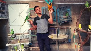 Visited At Adeel Exotic Birds Setup Talking Parrot