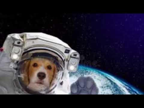 Les premiers chiens à avoir marché sur la lune