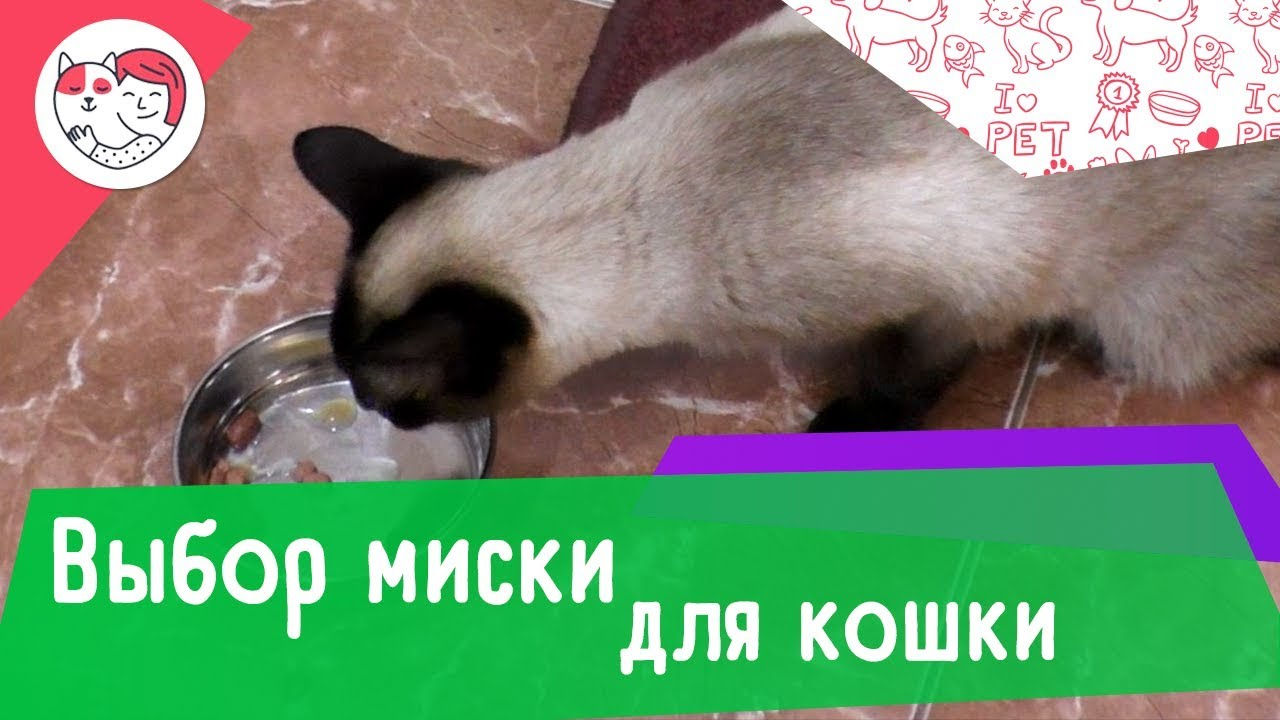 5 правил выбора миски для кошки