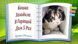Кошка Заходила В Горящий Дом 5 Раз