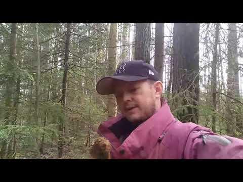 Прогулка за грибами
