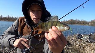Ловля окуня на отводной поводок все о рыбалке